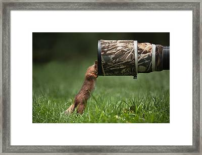 Red Squirrel Inspecting A Camera Lens. Framed Print by Andy Astbury