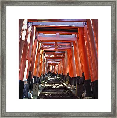 Red Torii Arches Over Steps At Inari Framed Print by Axiom Photographic