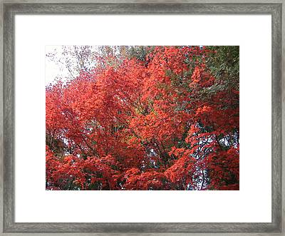 Red Tree Framed Print by Naxart Studio