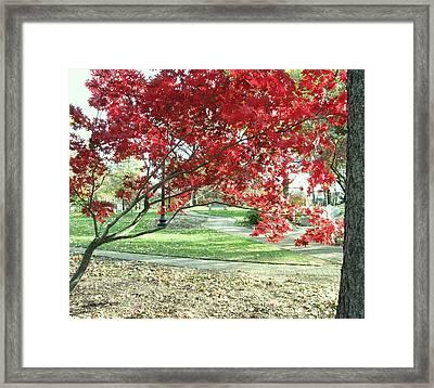 Red Tree Framed Print by Todd Sherlock