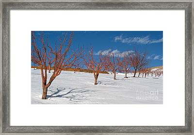 Red Trees Framed Print by Issam Hajjar