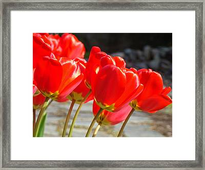 Red Tulip Flowers Art Prints Spring Florals Framed Print by Baslee Troutman