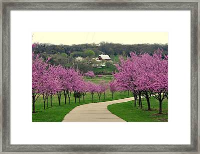 Redbud Framed Print by Marty Koch