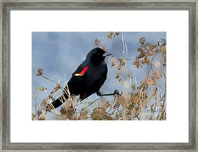 Redwing Blackbird Framed Print by Betty LaRue