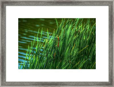 Reed Amoung Grass Framed Print by Ronald T Williams