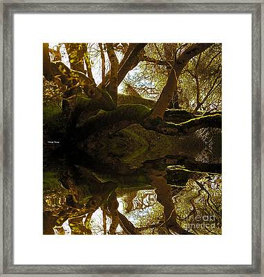 Reflecting Tree Framed Print by Cheryl Young