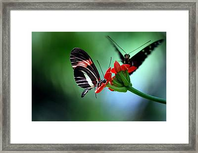 Reservations For Two Framed Print by Skip Willits