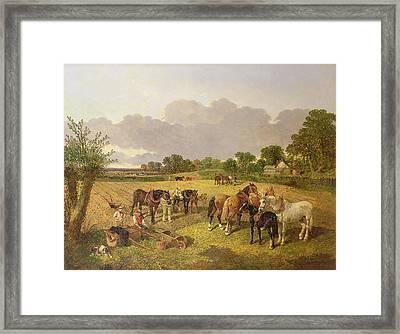 Resting Plough Team Framed Print by John Frederick Herring Snr