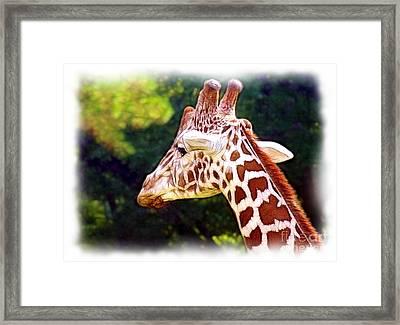 Reticulated Giraffe Framed Print by Judi Bagwell