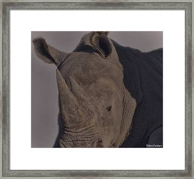 Rhino Charge Framed Print by Debra     Vatalaro