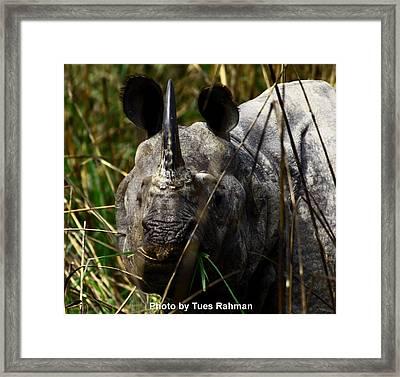 Rhino Framed Print by Tues Rahman