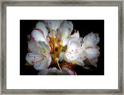 Rhododendron Explosion Framed Print by Deborah  Crew-Johnson