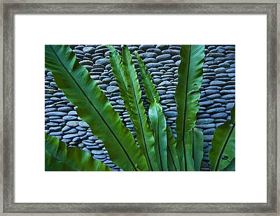 Rich Green Fern Leaves Against A Wall Framed Print by Jason Edwards