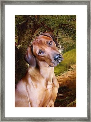 Ridgeback Woodland Framed Print by Julie L Hoddinott