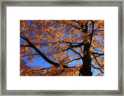 Right Place Right Time Framed Print by Lyle Hatch