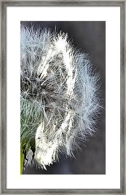 Ring Of Light Framed Print by Teresa Dixon