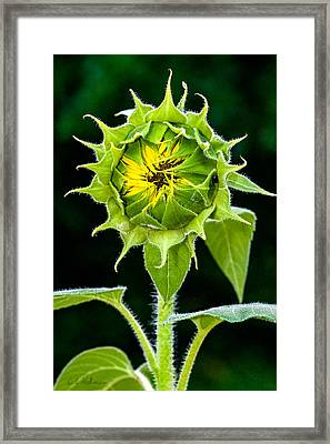 Rising Sun Framed Print by Christopher Holmes