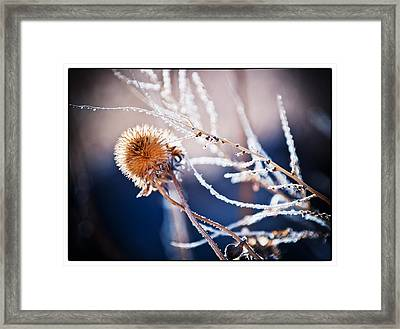 Road Side Plant Framed Print by Lisa  Spencer