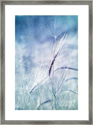 Roadside Blues Framed Print by Priska Wettstein