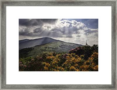 Roan Mountain Afternoon Framed Print by Rob Travis