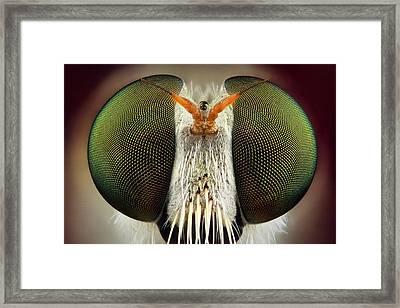 Robber Fly Framed Print by Yousef Al Habshi
