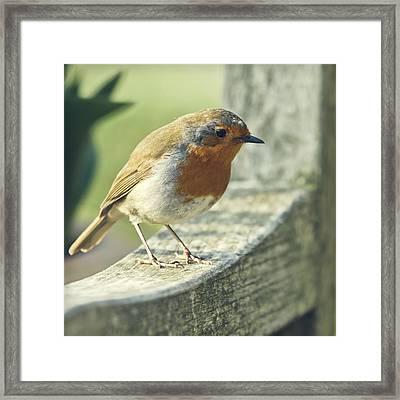 Robin Framed Print by BlackCatPhotos