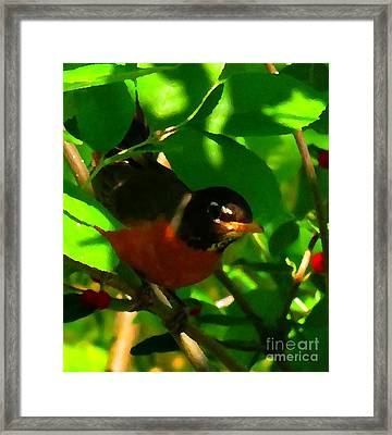 Robin Peeping Through Leaves Faux Oil Framed Print by Rrrose Pix