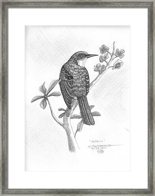 Robin Framed Print by William Deering