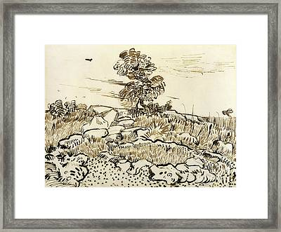 Rocky Ground At Montmajour Framed Print by Vincent van Gogh