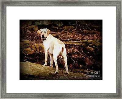 Rocky Framed Print by Melissa Nickle