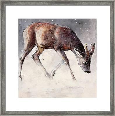 Roe Buck - Winter Framed Print by Mark Adlington