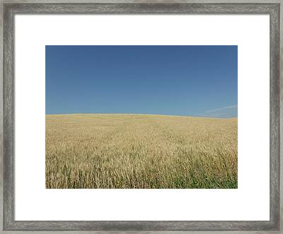 Rolling Wheat Fields Framed Print by Brian  Maloney