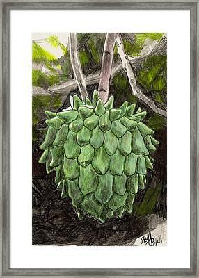 Rollinia Framed Print by Steve Asbell