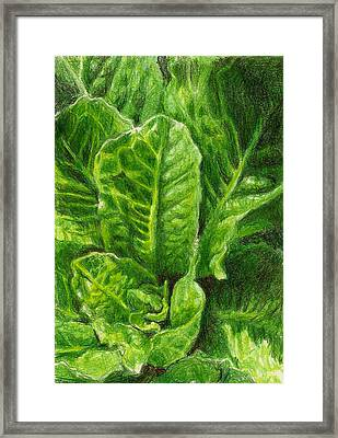 Romaine Unfurling Framed Print by Steve Asbell