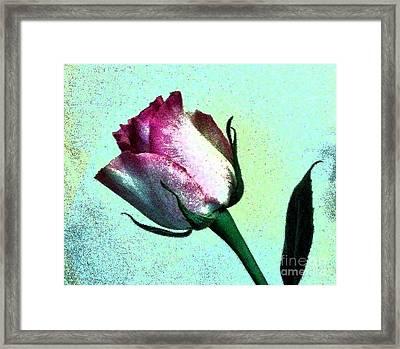 Romance Rose Framed Print by Marsha Heiken