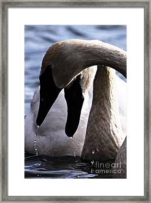 Romantic Dribbles Framed Print by Larry Ricker