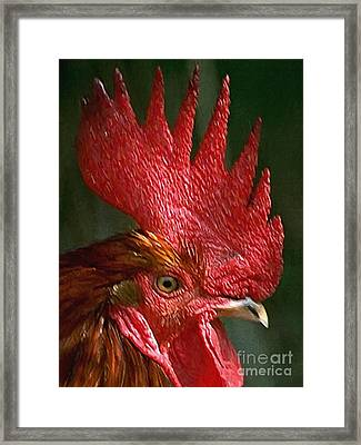 Rooster - Painterly Framed Print by Wingsdomain Art and Photography