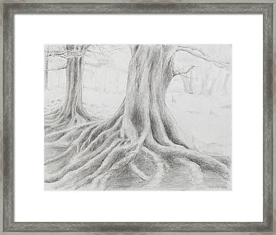 Roots Framed Print by Jean Moule