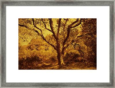 Roots Of Wisdom. Wicklow Hills. Ireland  Framed Print by Jenny Rainbow