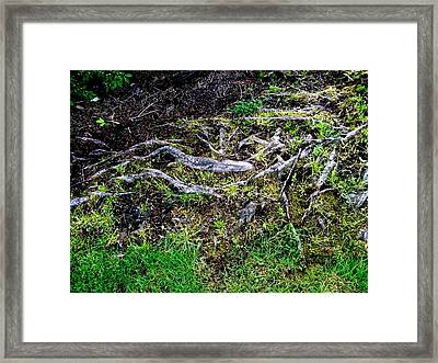 Roots Framed Print by Randall Weidner
