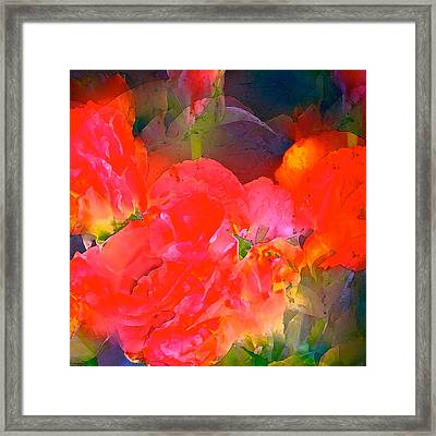 Rose 144 Framed Print by Pamela Cooper
