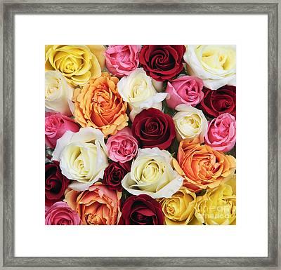 Rose Blossoms Framed Print by Elena Elisseeva
