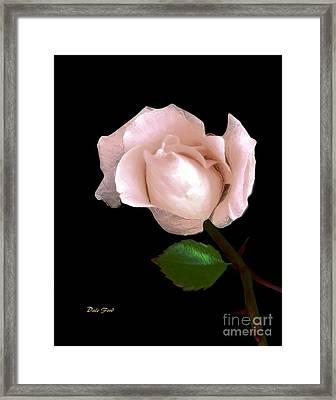 Rose Bud Framed Print by Dale   Ford
