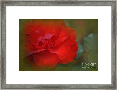 Rose Dream Framed Print by Mary Machare