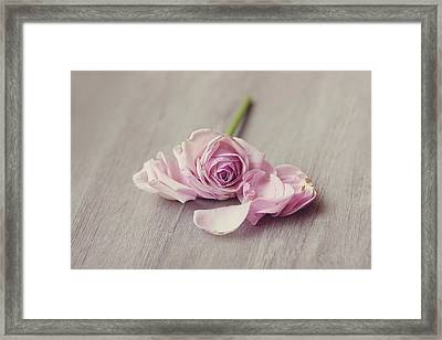 Rose Falling Apart. Framed Print by Leentje photography by Helaine Weide