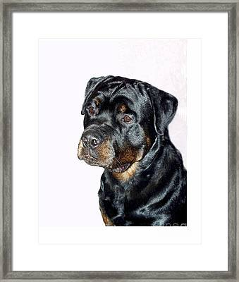 Rottweiler 1539 Framed Print by Larry Matthews