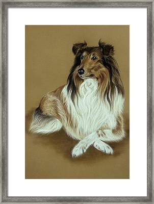Rough Collie Framed Print by Patricia Ivy