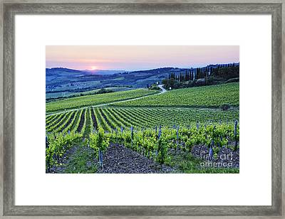 Rows Of Grapevines At Sunset Framed Print by Jeremy Woodhouse