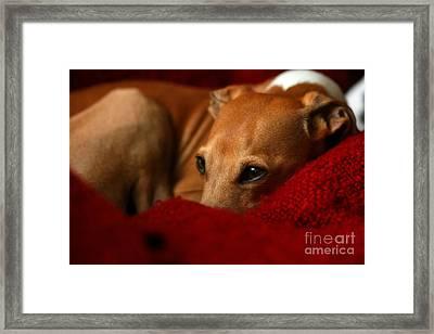 Ruby Rest Framed Print by Angela Rath