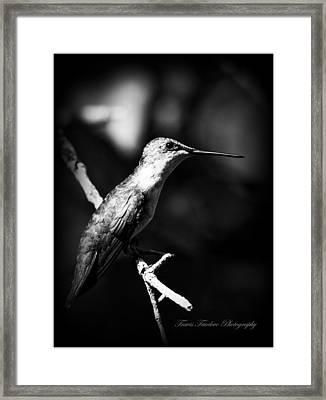 Ruby-throated Hummingbird - Signature Framed Print by Travis Truelove